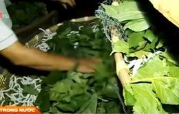 Lâm Đồng: Ngành dâu tằm tơ đang phục hồi