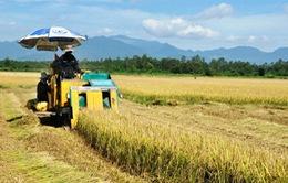 Thanh toán tiền hỗ trợ DN đầu tư vào nông nghiệp