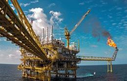Số lượng công ty dầu khí Mỹ nộp đơn phá sản tăng mạnh