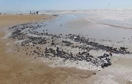 Dầu vón cục xuất hiện dày đặc ở các bãi tắm Vũng Tàu