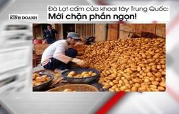 Cấm cửa khoai tây Trung Quốc: Chỉ mới chặn ngọn