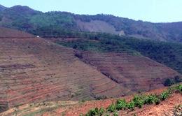 Sơn La: Gần 100ha cao su bị đốn hạ, dân lo lắng