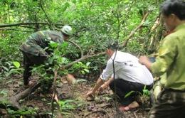 Quảng Bình: Phát hiện vụ vận chuyển động vật hoang dã trái phép