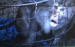 Phú Yên: Phát hiện cơ sở nuôi nhốt động vật hoang dã trái phép