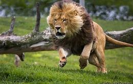 Thú vui săn bắn đe dọa sự sống các loài động vật hoang dã
