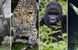 Biến đổi khí hậu đẩy nhanh tốc độ tuyệt chủngcác loài sinh vật