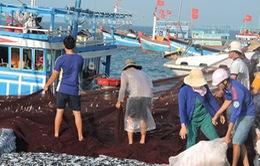 Ngư dân Lý Sơn hứng khởi vươn khơi, phát triển kinh tế