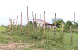 Hà Nội: Nợ tiền sử dụng đất, doanh nghiệp bỏ hoang dự án