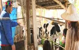 Thú vị tour du lịch nông nghiệp ở Ba Vì