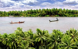 THTT: Khai mạc Lễ hội Dừa Bến Tre lần thứ IV-2015 (20h10, VTV1)