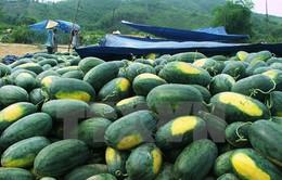 Thanh long và dưa hấu tiêu thụ mạnh qua cửa khẩu Tân Thanh
