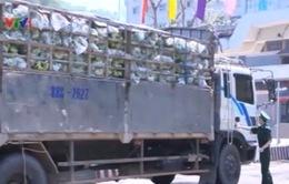 Xuất khẩu hoa quả tại cửa khẩu Tân Thanh vẫn chậm