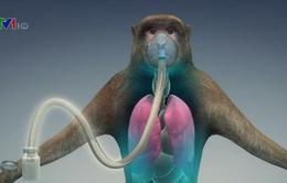 Thử nghiệm vaccine mới điều trị Ebola