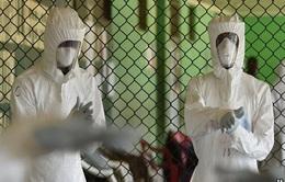 Tốc độ lây truyền Ebola tại Tây Phi đang giảm dần