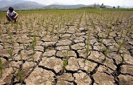 Peru ban bố tình trạng khẩn cấp về hiện tượng El Nino