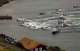 Kinh hoàng: Hơn 250 con cá voi bị sát hại trong lễ hội săn cá voi
