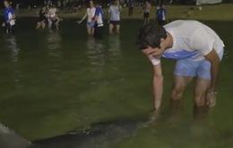 Roger Federer vui đùa cùng cá heo tại Australia