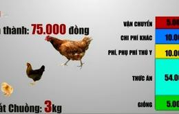 """DN chăn nuôi, chế biến thua trên """"sân nhà"""" vì gà ngoại giá rẻ"""