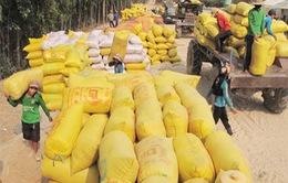 VFA sẽ giám sát việc thu mua lúa gạo tạm trữ
