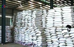 Lào Cai bác thông tin hơn 30.000 tấn gạo bị mốc