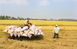 Gia hạn thời gian cho vay mua tạm trữ thóc, gạo