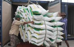 Doanh nghiệp nên cân nhắc thời điểm xuất khẩu gạo