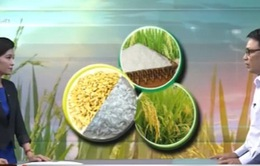 Xây dựng thương hiệu gạo Việt Nam - Bắt đầu từ đâu?