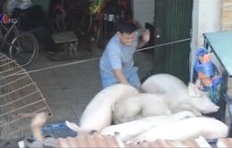 TP.HCM: Dân khổ vì lò mổ gia súc, gia cầm giữa khu chung cư