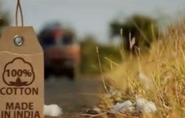 Ấn Độ: Nhiều nông dân tự tử vì cây trồng biến đổi gen