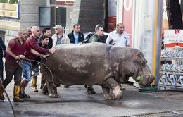 Georgia nỗ lực bắt lại động vật hoang dãsau trận lũ lụt lịch sử
