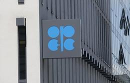 Giá dầu chạm đáy 12 tuần sau cuộc họp của OPEC