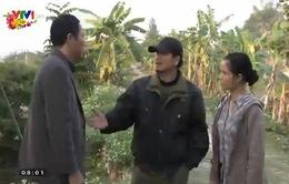 Gia phả của đất: Thể hiện hướng đi mới của phim về đề tài nông thôn