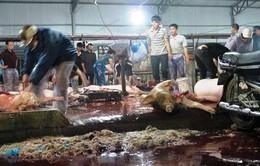 Kiểm tra đột xuất các cơ sở giết mổ gia súc, gia cầm