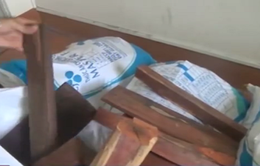 Đồng Tháp: Bắt giữ đối tượng vận chuyển gỗ trái phép