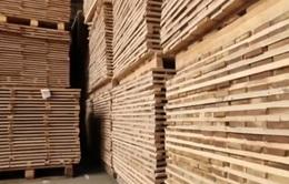 Công nghệ sản xuất gỗ ván từ nấm