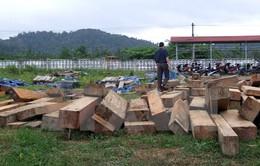 Lâm Đồng: Bắt 2 đối tượng phá rừng, khai thác hơn 300m3 gỗ trái phép