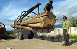 Bắt 2 xe chở gỗ lậu khối lượng lớn tại Kon Tum