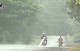 Phú Yên: Gia tăng xe máy chở gỗ lậu trong mùa mưa