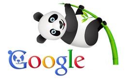 """Google giới thiệu công cụ tìm kiếm """"Gấu trúc"""""""