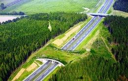 Kỳ thú những cây cầu dành riêng cho… động vật