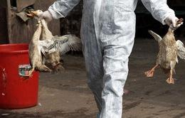 Cảnh báo nguy cơ lây nhiễm virus cúm A/H7N9 trênngười