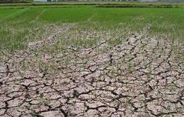 Bộ NN&PTNT ban hành Chỉ thị ứng phó với El Nino
