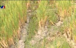 Nghệ An: Khó chuyển đổi cây trồng chịu hạn