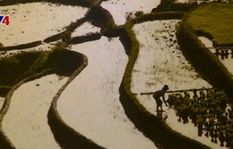 Việt Nam qua ống kính nhiếp ảnh gia Hàn Quốc