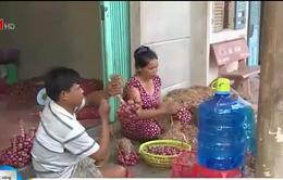 Viêm loét giác mạc  - Nguyên nhân gây mù mắt của người dân vựa hàng tím Vĩnh Châu