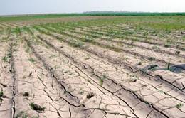 Quảng Trị: Nắng hạn kéo dài, hàng nghìn hecta đất bị bỏ hoang
