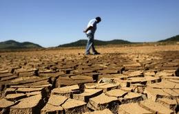 Brazil: Hạn hán nặng nề nhất trong vòng 80 năm