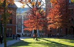 Bán tài liệu tham khảo, trường Harvard thu 200 triệu USD/năm