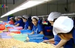DN sản xuất hạt điều gặp khó khi nguồn nguyên liệu bấp bênh