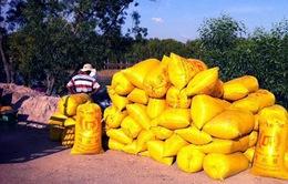 Tiến độ thu mua gạo tạm trữ đạt chậm